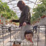 葉酸_maiohina_s27-2