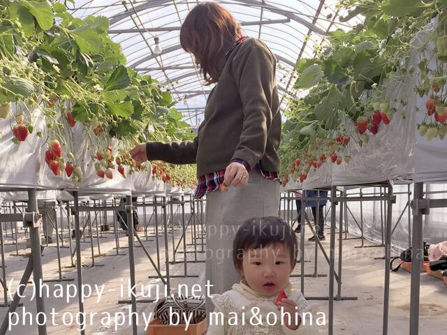 葉酸_maiohina_27-2